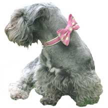 Holly & Lil Bow calf leather dog collars